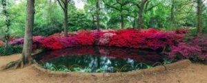 Isabella-Plantation-Richmond-Park-London